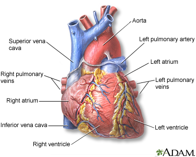 Heart Failure: Causes | University Health Care System
